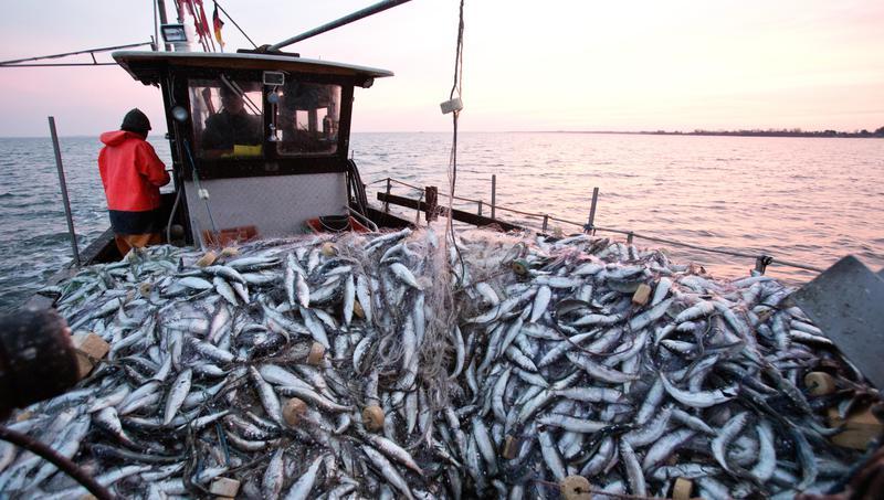 Cuxhavener Nachrichten: Brexit – Fischwirtschaft spielt große Rolle